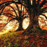 Magic Tree Autum